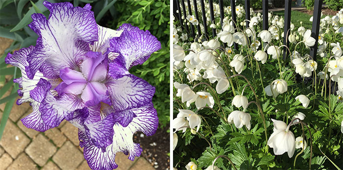 may flowers 2015